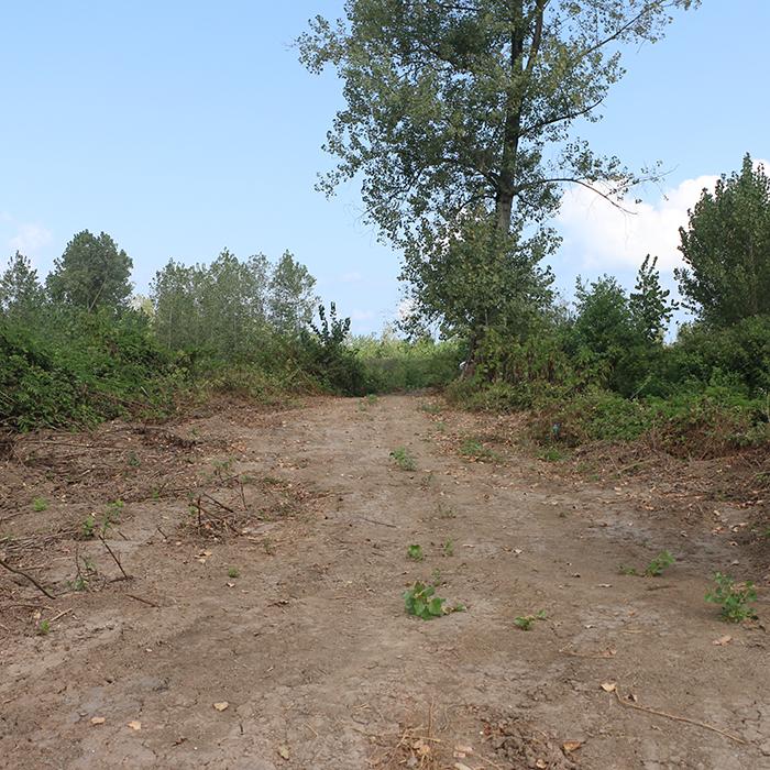 دستور دادستان درخصوص رفع تصرف در جنگل فتاتو