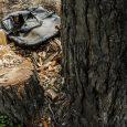 اداره کل منابع طبیعی و آبخیزداری گیلان ادعای ثبت ملی جنگل فتاتو را رد کرد