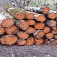 ۲۶ اصله چوب قاچاق کشف و ضبط شد