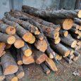 ۲۴۷ اصله چوب قاچاق کشف و ضبط شد