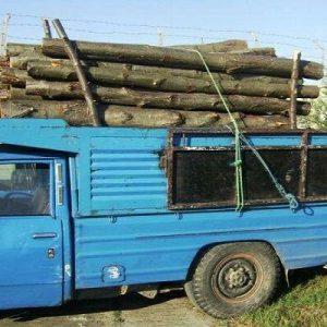 خمام - ۲۳ اصله چوب قاچاق کشف و ضبط شد