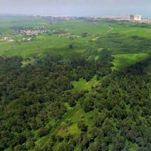 خمام - جنگل فتاتو فرایند ثبت ملی را بهعنوان آثار هیرکانی طی کرده است